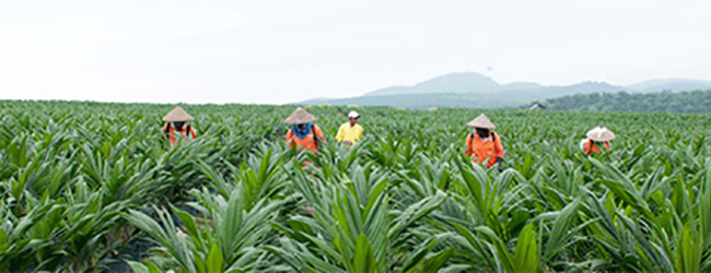 Top Image - Bumitama Agri, a young and fast-growing investment opportunity