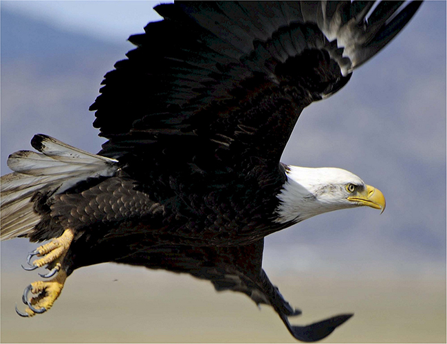 Article Image - The Eagle Investing Personality