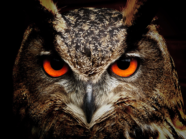 Article Image - The Owl Investing Personality
