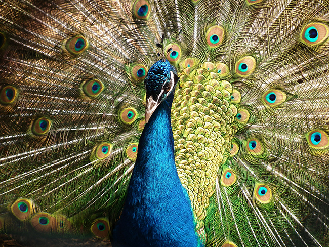 Article Image - The Peacock Investing Personality